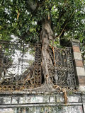 Baum gewachsen um Zaun Stockbilder