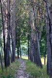 Baum gezeichnete Pfad- und Fallblätter Lizenzfreie Stockfotografie