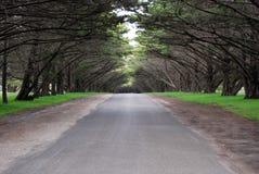 Baum gezeichnete Straße Lizenzfreie Stockfotos