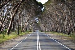 Baum gezeichnete Straße auf Känguru-Insel Stockfotografie