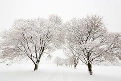 Baum gezeichnete Straße bedeckt im Schnee Stockfoto