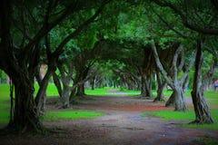 Baum gezeichnete Straße in einem Park lizenzfreie stockbilder
