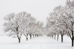 Baum gezeichnete Straße in einem Schneesturm Lizenzfreies Stockbild