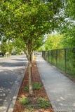 Baum gezeichneter Bürgersteig Stockbild
