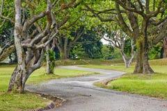 Baum gezeichneter Pfad Stockfotografie