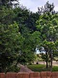 Baum-gezeichnetes Laufwerk lizenzfreie stockbilder