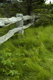 Baum, Gras, hölzerner Zaun Stockfotografie