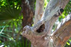 Baum-Griff Stockbilder