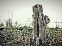 Baum großes stame lizenzfreie stockfotografie