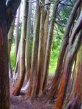 Baum-Gruppe Stockfotos
