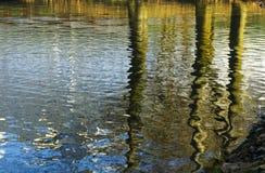 Baum hält Reflexionen in geplätschertem Wasser auf Lizenzfreie Stockfotos