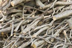 Baum haftet Hintergrund lizenzfreie stockfotos