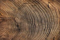 Baum hat einige große Knoten Lizenzfreie Stockbilder