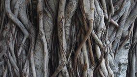 Baum hat einige große Knoten Stockfotos