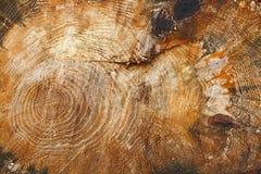 Baum hat einige große Knoten Stockbilder