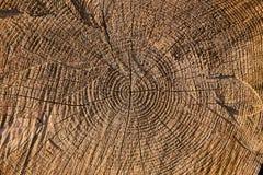 Baum hat einige große Knoten Stockbild