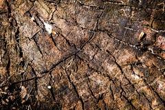 Baum hat einige große Knoten lizenzfreie stockfotografie