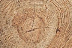 Baum hat einige große Knoten Lizenzfreies Stockbild
