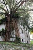Baum-Haus Lizenzfreies Stockbild