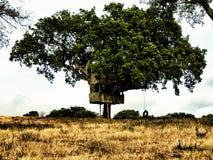 Baum-Haus Lizenzfreies Stockfoto