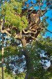 Baum-Haus-Lager der wild lebenden Tiere in Nationalpark Yala, Sri Lanka Stockfotos