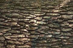 Baum-Hauthintergrund hölzerne der Beschaffenheit alte Betriebsnatürlicher Lizenzfreies Stockfoto