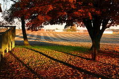 Baum heraus im Land (Farbe) Stockfotos