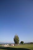 Baum-Himmel Stockfotografie