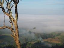 Baum-Himmel Stockbild