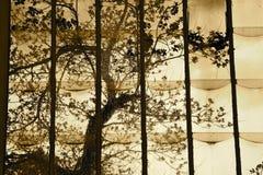 Baum hinter dem Stained-glassfenster Lizenzfreies Stockbild