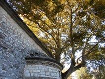 Baum hinter Steinwand, Ioannina, Griechenland lizenzfreies stockbild