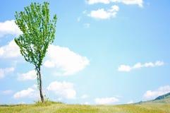 Baum-Hintergrund Lizenzfreie Stockbilder