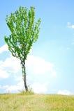 Baum-Hintergrund Lizenzfreie Stockfotografie