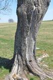 Baum - Hintergrund Lizenzfreie Stockbilder