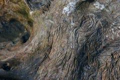Baum Hintergrund Lizenzfreies Stockbild
