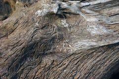 Baum Hintergrund Lizenzfreie Stockbilder