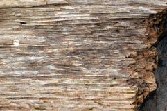 Baum Hintergrund Stockfotografie