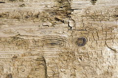 Baum Hintergrund Stockbilder