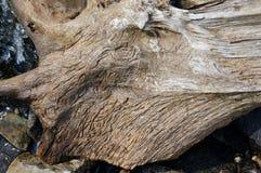 Baum Hintergrund Lizenzfreies Stockfoto