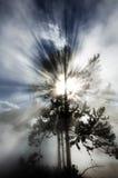 Baum-Hintergrundbeleuchtungs-hintergrundbeleuchtete Sonnenstrahl-Strahln-Lichtstrahlen Lizenzfreie Stockfotografie