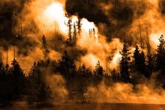 Baum-Hintergrundbeleuchtungs-hintergrundbeleuchtete Sonnenstrahl-Strahln-Lichtstrahlen Stockbilder