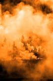 Baum-Hintergrundbeleuchtungs-hintergrundbeleuchtete Sonnenstrahl-Strahln-Lichtstrahlen Stockfoto
