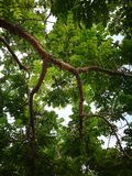 Baum hoch über mir Lizenzfreies Stockbild