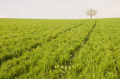 Baum am horizont stockfotos