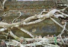 Baum im alten Fenster nach innen Stockfoto