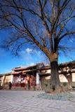 Baum im asiatischen Stadtquadrat Stockfotografie