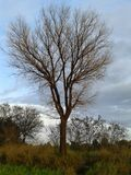 Baum im autm Lizenzfreies Stockfoto