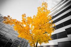 Baum im Bürogebäude Stockfotos