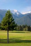 Baum im Berg Stockbild