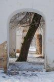 Baum im Bogen in den Ruinen Lizenzfreie Stockbilder